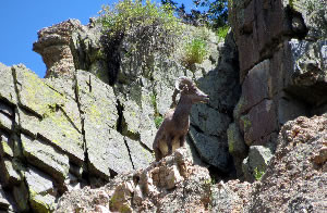 visiting rocky mountain national park would be number three on our things to do in the Estes Park.
